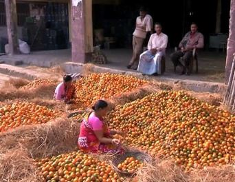 Indian orange traders complain of losses due to heavy excise